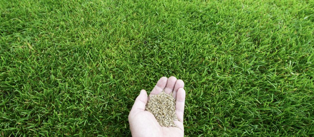 Lawn Grass Seeding