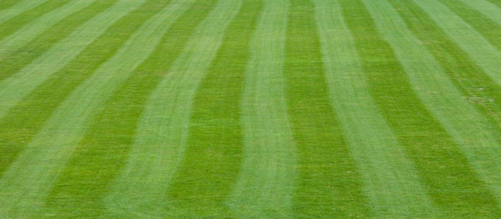 Commerical Lawn Mowing